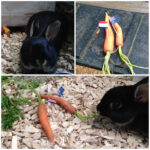 WC2014: Australia vs the Netherlands and what do rabbits think